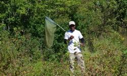 IMGP0444_PMB TDV terrain insectes