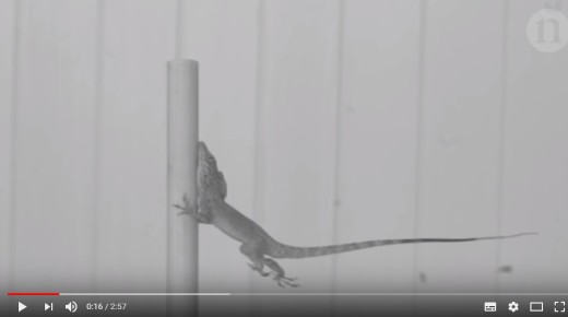 Nature video_lizards